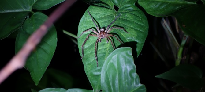 Forêt tropicale et araignées à Daintree – Spiders and tropical forets in Daintree